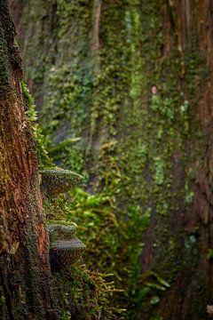 Paddenstoelen aan een dode boomstam van Jenco van Zalk