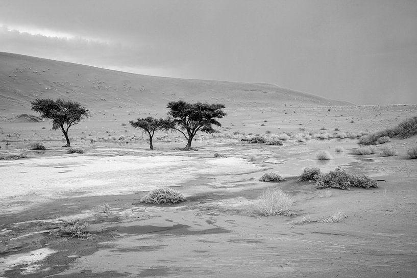 Deathvlei in Namibië na een zeldzame regenbui van Jan van Reij