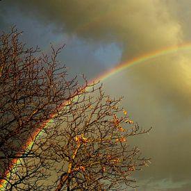 Regenbogenbaum von Inge Heathfield