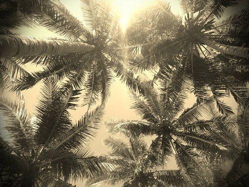 """""""Palmtrees"""" van"""