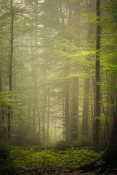 forêt tropicale sur Franziska Jungen