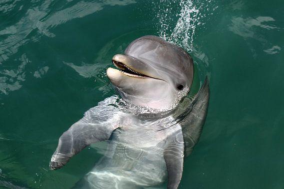 Dolfijn van Antwan Janssen