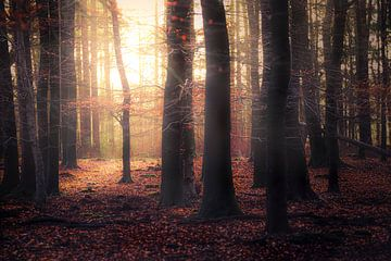 Donker Herfstbos van Ton Drijfhamer