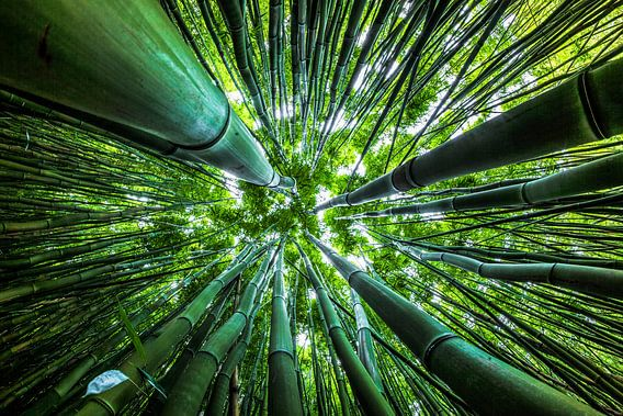 Dazzling Bamboo van Nanouk el Gamal - Wijchers (Photonook)