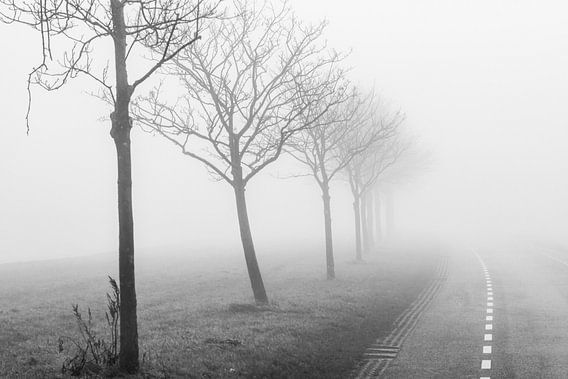 Foggy morning van Jordy Kortekaas