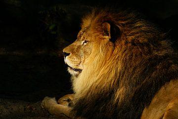 Portret van een leeuw van Annemieke Storm