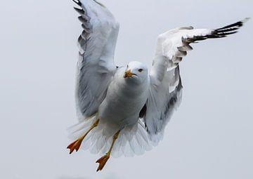 als een vogel zo vrij van cindy kuiphuis