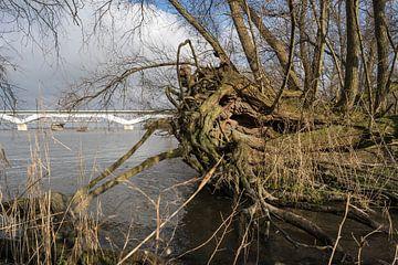 ruige oever Hollandsch Diep van Eugene Winthagen
