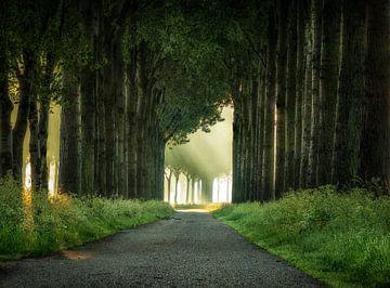Typische landweg van