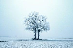 Eenzaam in de kou, winterscene.