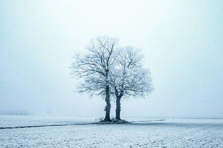 Eenzaam in de kou van Gert Hilbink