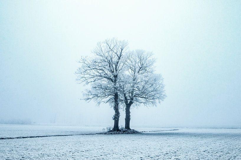 Eenzaam in de kou, winterscene. van Gert Hilbink