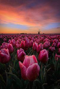 Frühlingshafter Sonnenaufgang in den Niederlanden von Costas Ganasos