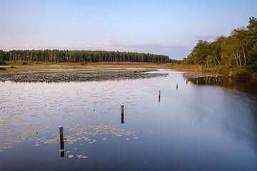 Pfähle im Wasser von Johan Vanbockryck