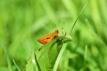 Kleine vlinder van Gerard de Zwaan