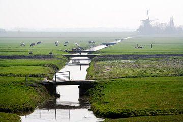 Typisch niederländische Polderlandschaft mit Kühen und Windmühlen in Leimuiden von Peter de Kievith Fotografie