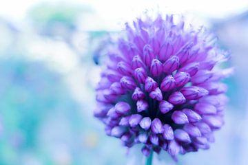 Power Flower 2 van Ewald Verholt