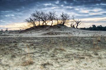 Paysage de dunes au lever du soleil