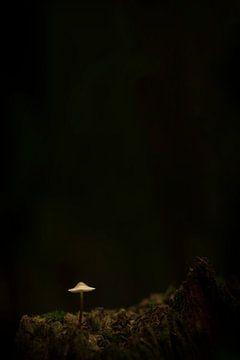 Lampje... van Erik Veldkamp