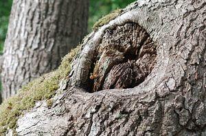 Stronk de l'arbre sur Erik Reijnders