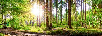 Wald mit strahlender Sonne von Günter Albers