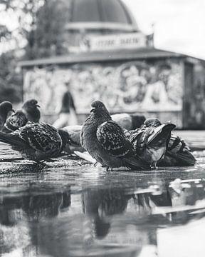 Vögel in Amsterdam von Sam ter Veer
