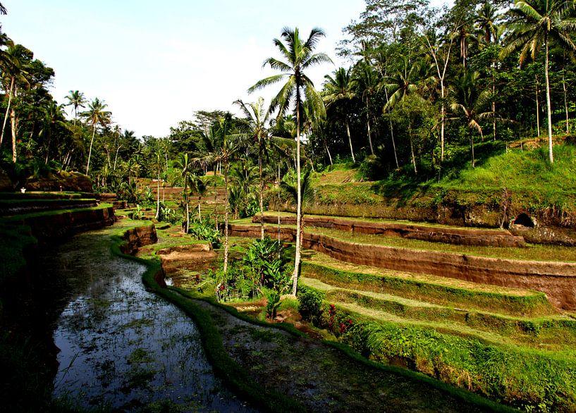 Rijstvelden op Bali van Wijnand Plekker