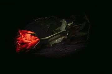 De Roos, photographie en studio Nature morte avec fleurs sur Coby Zwartbol