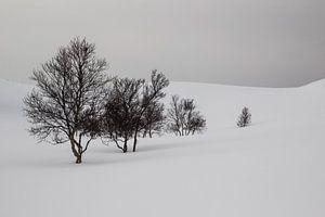Sneeuw en bomen op de berg van
