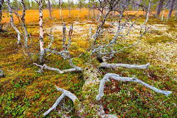 Un arbre tombé dans un paysage linguistique