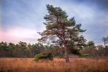 Eenzame boom van Katjang Multimedia