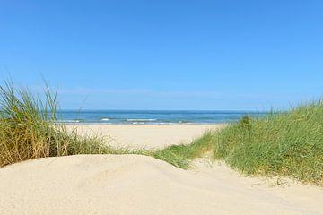 Dünen am Strand mit Strandhafer während eines schönen Sommertages am Nordseestrand von Sjoerd van der Wal