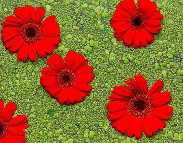 rood en groen van Corrie Ruijer