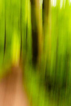 Stimmungsvoll Abstrakt Bäume im Frühling im Wald mit Waldweg Verwischung von Dieter Walther