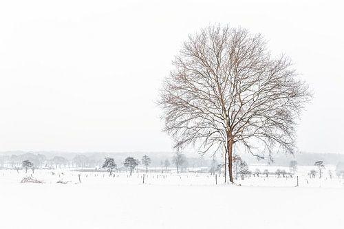 Sneeuwlandschap met een boom