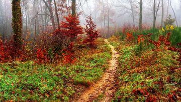 Der Wald 3 von Caroline Lichthart