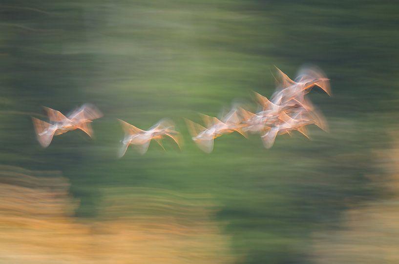 Ganzen in vlucht (abstract) van Hans Debruyne