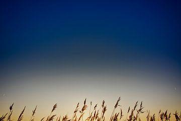 Riet bij zonsopkomst von Guido  van Herpen