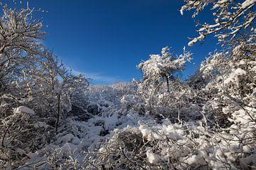 Winterlandschap van BVpix