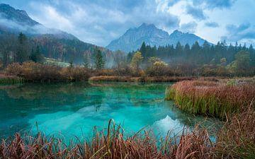 Het Zelenci nature reserve van Simon Bregman