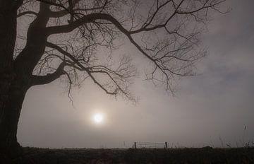 landschap met boom van Moetwil en van Dijk - Fotografie