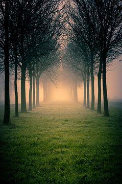 Laantje met bomen in de mist van Tony Buijse