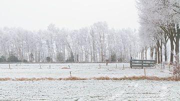 Mist en sneeuw op de velden van Truus Nijland