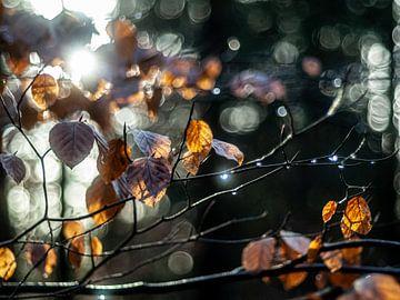 Herbstlicher Wald von Martijn Wit