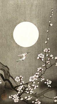 Zen sur Jacky Gerritsen