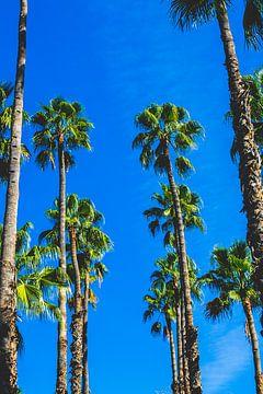 Luchtige palmen van Lotte Spek