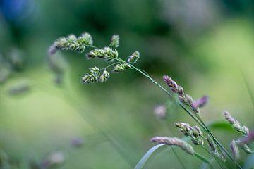 Gras van Michael Fousert