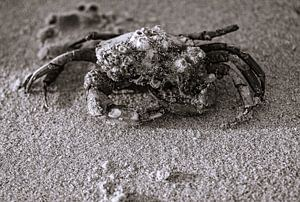 jeuk, moet je krabben