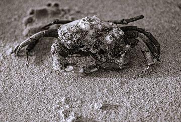 jeuk, moet je krabben sur Peter van Mierlo