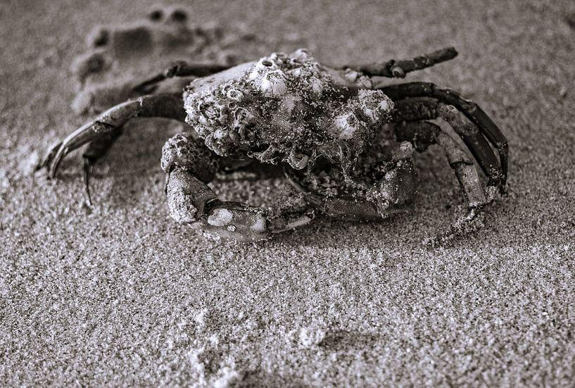 jeuk, moet je krabben van Peter v Mierlo